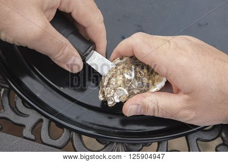 Man Shucking An Oyster With A Knife Closeup With Hands