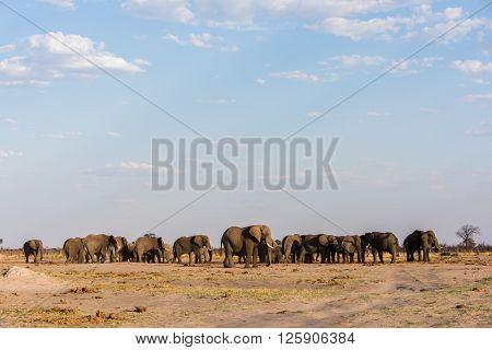Elephant Symmetry