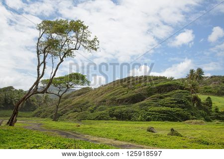 Wild nature scenery on the tropical caribbean island of Dominica on the Antilles.