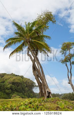 Wild nature on the tropical caribbean island of Dominica on the Antilles.