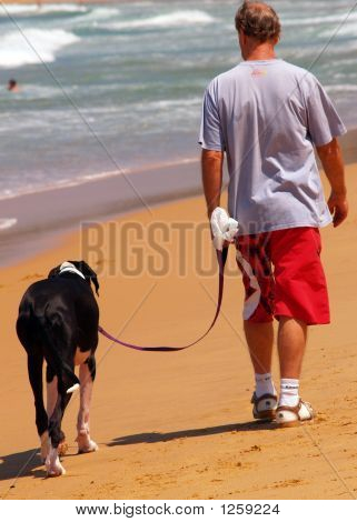 Passear o cão