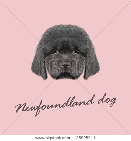 Cute fluffy black face of domestic dog on pink background.