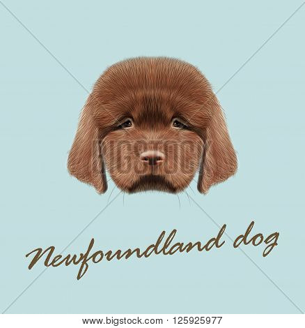 Cute fluffy red face of domestic dog on blue background.