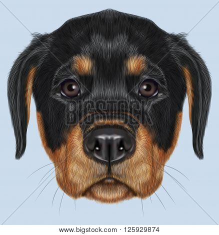 Cute face of domestic dog on blue background.