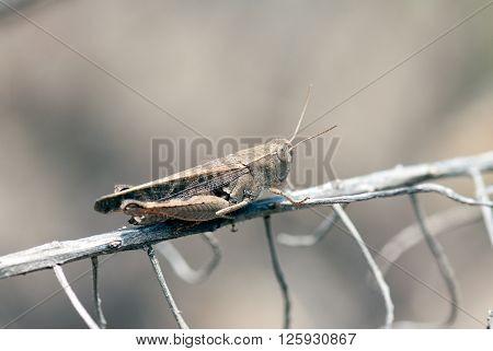 A macro shot of a grasshopper on a branch