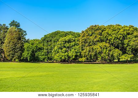 Grass Field Large Trees Clear Blue Sky - Sydney Australia On A Sunny Day