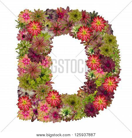 letter D made from bromeliad flowers isolated on white background