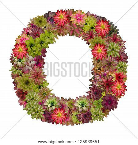 letter O made from bromeliad flowers isolated on white background