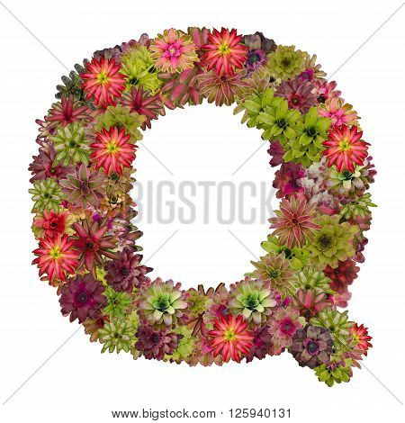letter Q made from bromeliad flowers isolated on white background