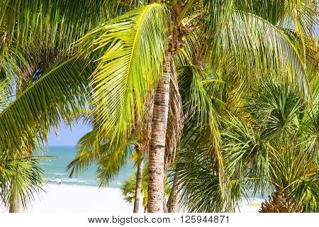 View of the white sand beach and the Gulf of Mexico through palm leaves on a sunny day in Fort Myers Beach.