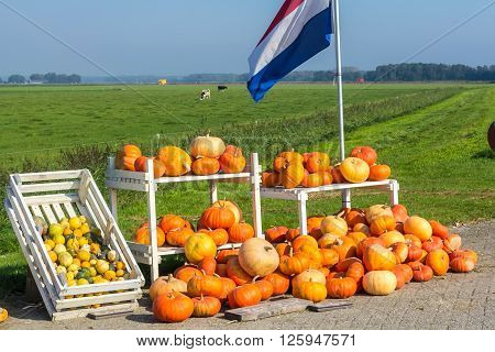 Flevoland the Netherlands - October 2 2011: pumpkins for sale in the countryside