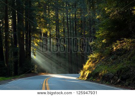 Sunlight pokes through redwoods, illuminating a forest road