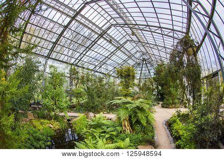 Beautiful Tropical  Exhibition In Palmengarten In Frankfurt