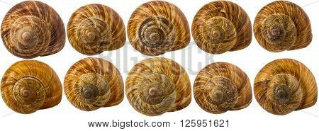 multiple snail shells isolated on white background.