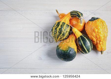 Decorative pumpkins original plant admire miniature fruits of various shapes and colors.