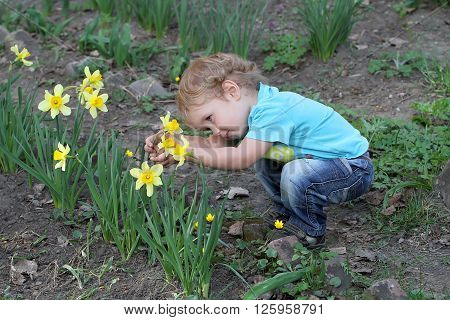 The Little White Child Carefully Considering Narcissus Flower In The Backyard Of The House. The Boy