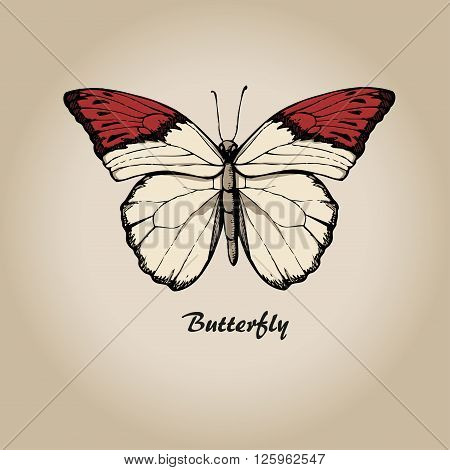 Butterfly vtctor. Insect sketch collection for design
