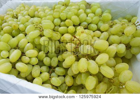 Green grapes for sale at a market