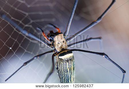 Closeup - Spider on spiderweb (cobweb) against nature bokeh background. Outdoors. Macro.