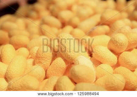 Yellow silkworm cocoon for many worm background