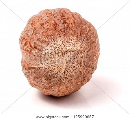 One nutmeg whole  isolated on white background.