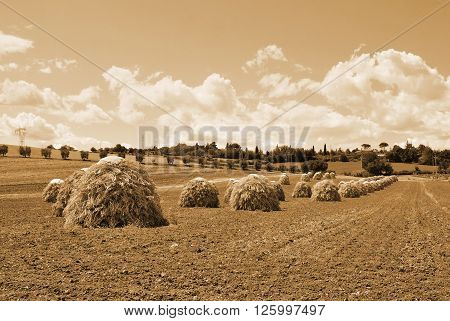 natural seed drying in countryside in italy