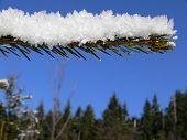 image of bordure  - It is snowy spruce bough - JPG
