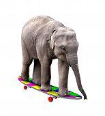 Постер, плакат: Скейтбординг слон