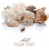 stock photo of sea life  - Sea Shells - JPG