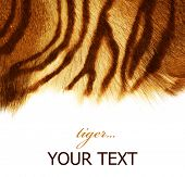 stock photo of tigers  - Tiger Skin - JPG
