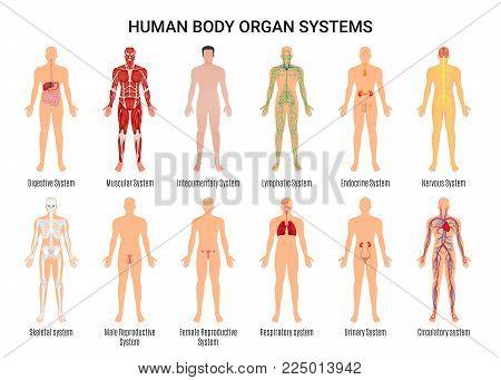 Main 12 human