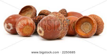 Dry Brown Acorns