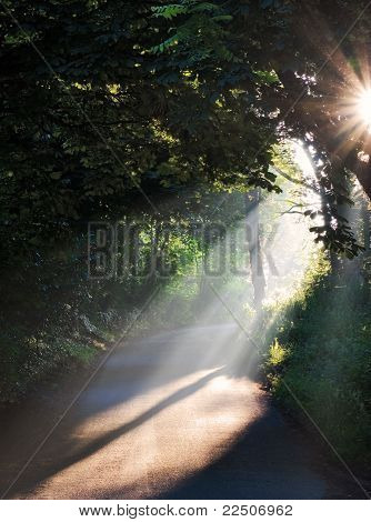 Summer Morning Sun Rays On A Road