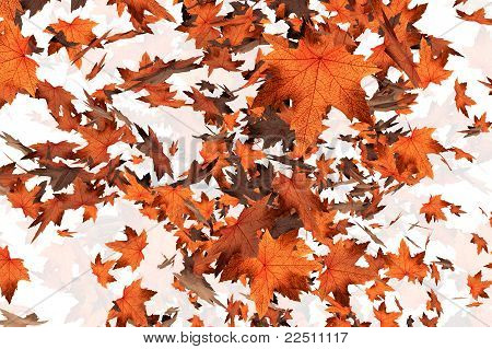 Autumn Leaves 07