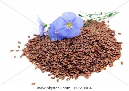 Linum Usitatissimum Flowers And Seeds