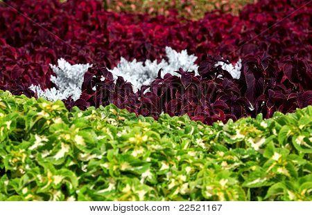 Vivid Flower Bed