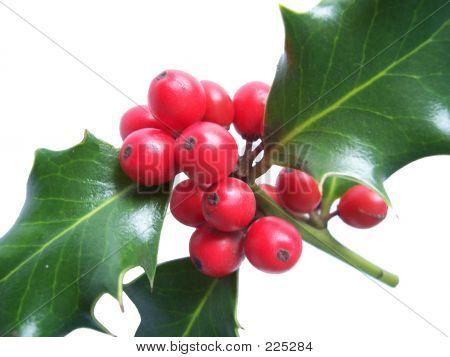 Holly 002