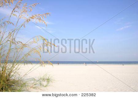 Aveia de praia