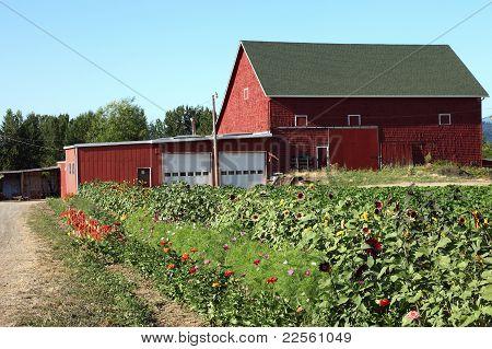 Old farm barn & flower field, Portland OR.
