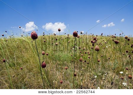 Summer Grasses In The Steppe