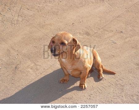 Small Cute Dog
