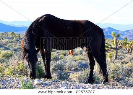 horse stallion wild