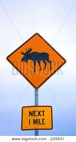 Moose Crossing