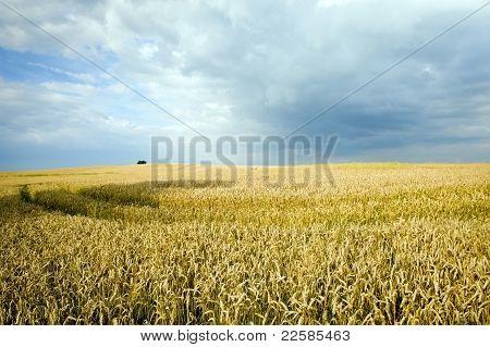 Ecological Countryside Landscape