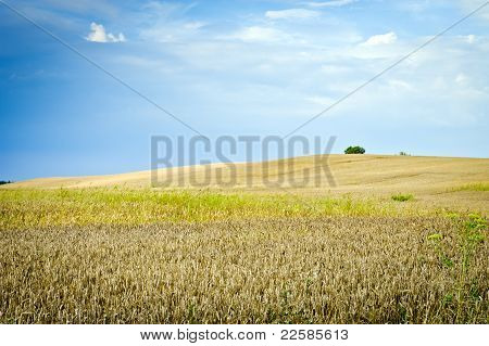 Ecological Countryside Landscape