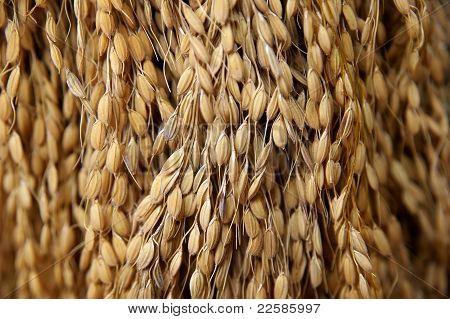 Dried Grain