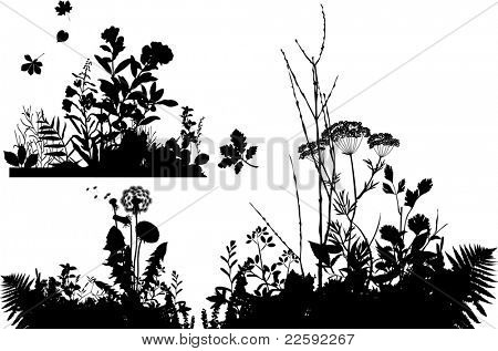 Collection of plants.  Raster version of vector illustration.