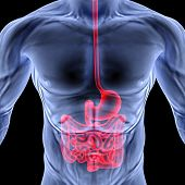 picture of esophagus  - the human body by X - JPG