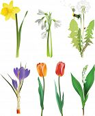 foto of easter flowers  - Set of spring flowers - JPG