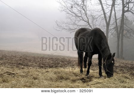 Foggy Morning Feed
